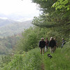 The Gott Family Farm Hike : The Southern Appalachian Highlands Conservancy holds a 210 acre protected land easement on the Gott Family Farm located in the Shelton Laurel Community of Madison County, NC with the highest elevation at 3200 feet.  The Got Family Farm is in the view shed of the Appalachian Trail and contiguous to the National Forest. Take a look at one of the beautiful hikes that was led by SAHC and the Gott's.